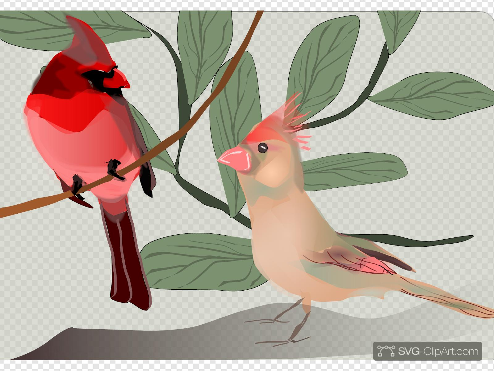 Free Cardinal Clip Art with No Background - ClipartKey