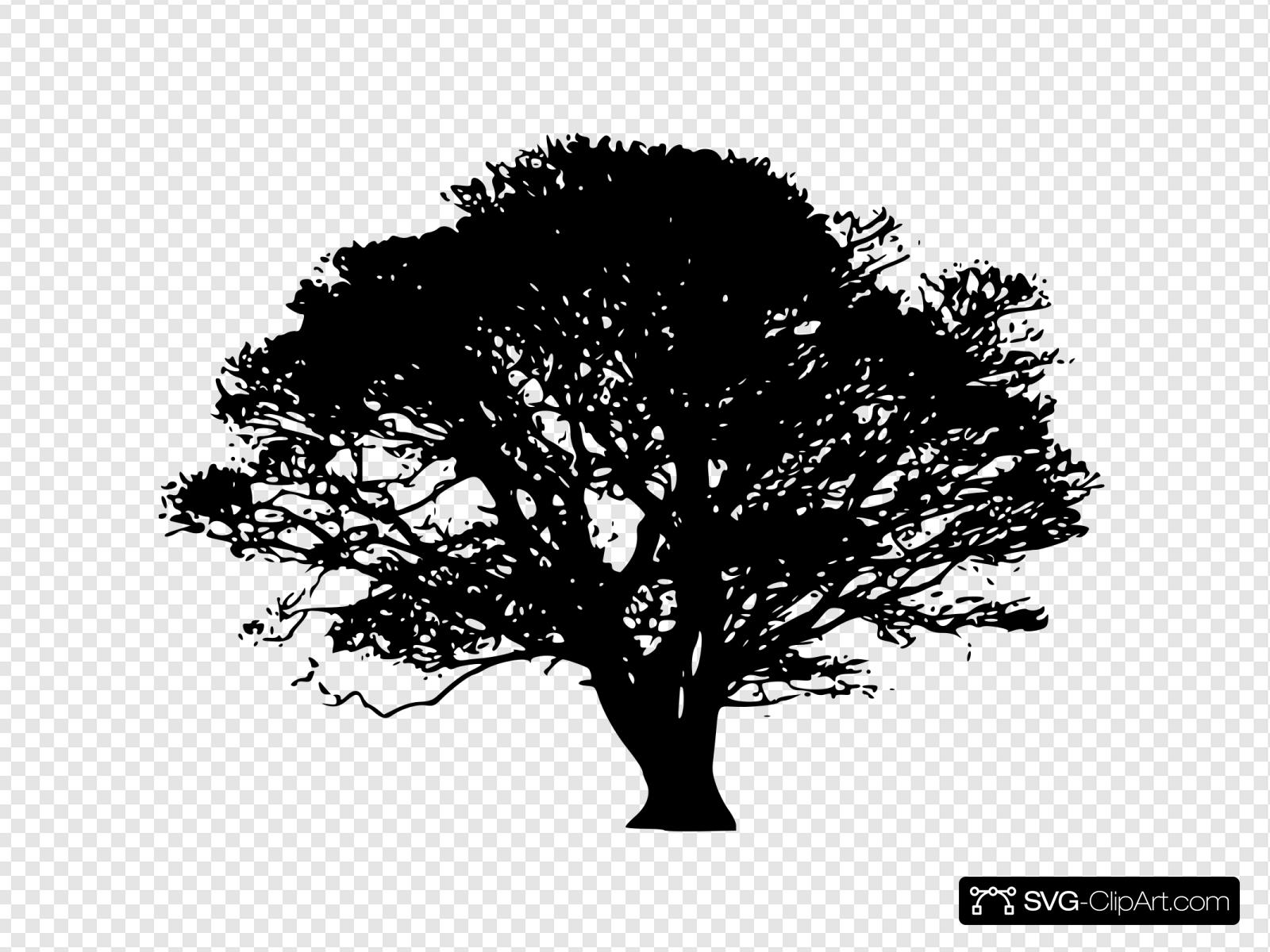 Oak Tree With Transparent Background Clip art, Icon and SVG