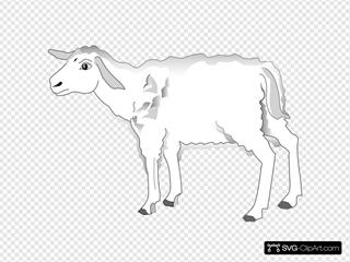 Cautious Lamb