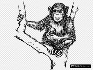 Grayscale Chimpanzee