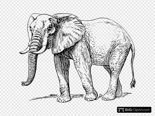 Elephant SVG Cliparts