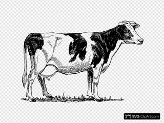 Cow 13