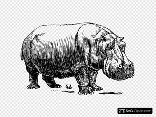 Hippopotamus Drawing