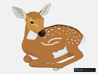 Resting Baby Deer