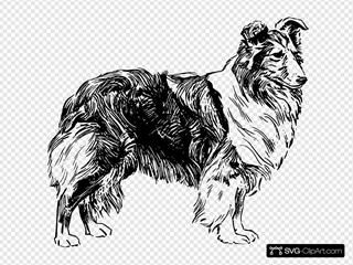 Shetland Sheepdog Drawing
