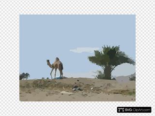 Camel Palm Tree Desert