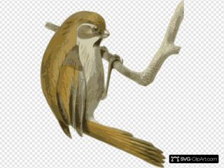 Paradoxornis Verreauxi