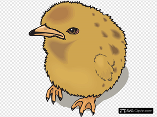 Fuzzy Baby Chick