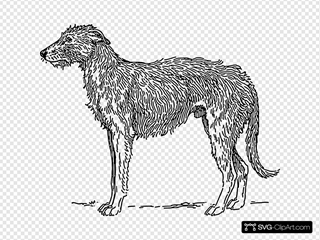 Deerhound Dog
