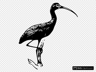 Glossy Ibis Clipart