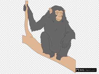 Chimp Sitting On A Branch