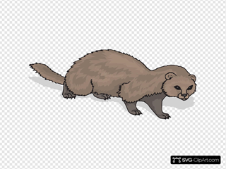 Ferret With Shadow