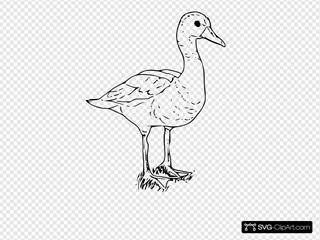 Black Bellied Wisteling Duck