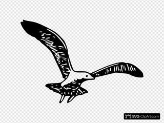 Herring Gull B