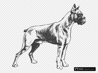 Boxer Drawing SVG Clipart