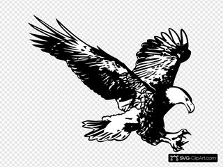 Hunting Eagle Sketch