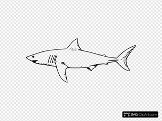 White Shark Outline