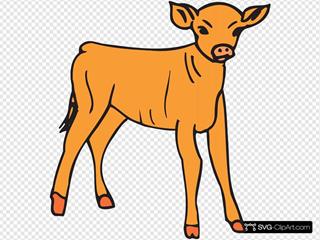 Orange Calf