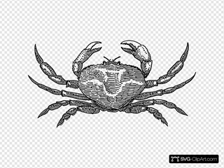 Crab SVG icons