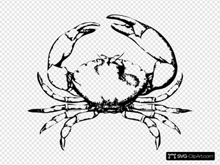 Stone Crab SVG Cliparts