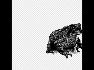 Toad SVG Clipart
