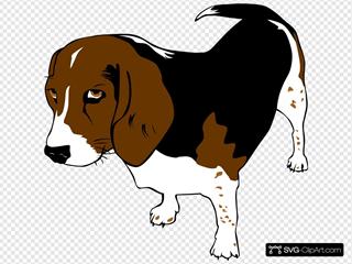 Pet Beagle