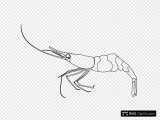 Shrimp Outline