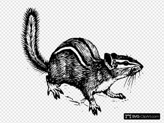 Alert Chipmunk Drawing