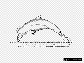 Leaping Dolphin Drawing