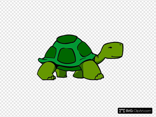 Green Turtle Fixed