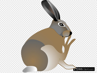 Itchy Rabbit
