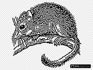 Dormouse Rodent