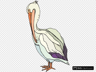 Pelican With Colorful Feathers SVG Clipart