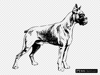 Drawing Of A Boxer