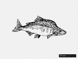 Pink Salmon SVG icons