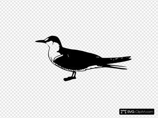 Bird Animal Standing