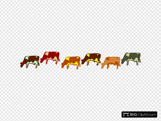 Multicolored Cows