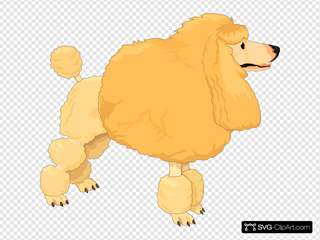 Fluffy Yellow Poodle