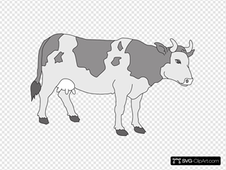 Gray Colored Cow