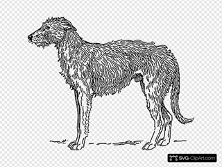 Deerhound Drawing