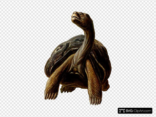 Prehistoric Turtle With Long Neck