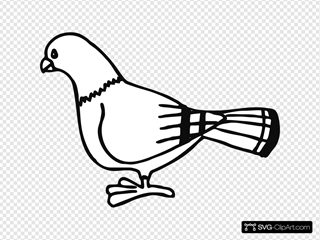 Pigeon For Coloringbook