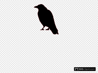 Crow SVG icons