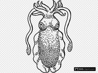 Cuttlefish Squid Fish
