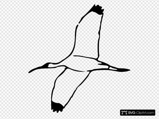 Wood Ibis 2