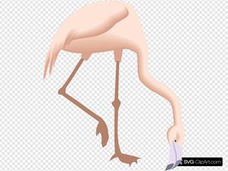 Flamingo Bending Down