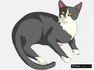 Gatto Cat 3