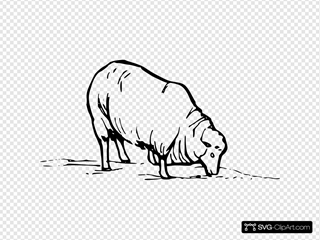 Earting Sheep