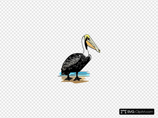 Stading Pelican In Color