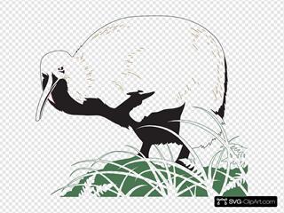 Kiwi Bird In The Grass
